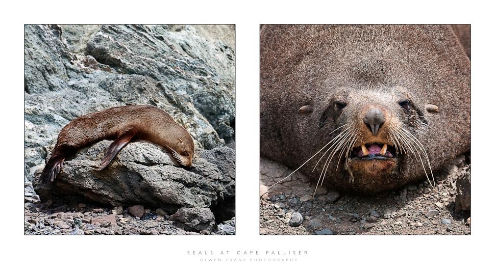 OEVANS_Seals.jpg